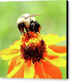 Bee On A Flower - Canvas Print