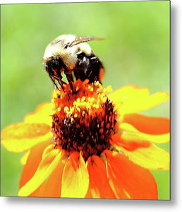 Bee On A Flower - Metal Print