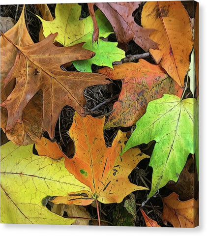 Early October Leaves 1 - Canvas Print