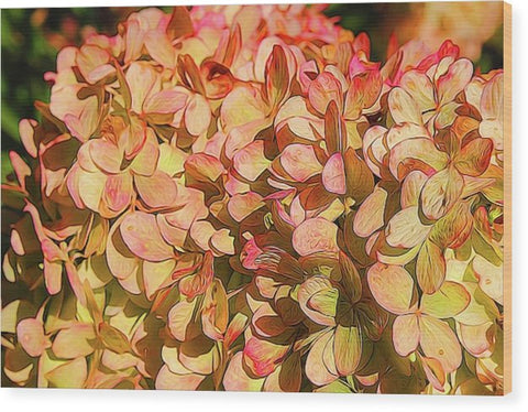 Pink And Creamy Hydrangea - Wood Print