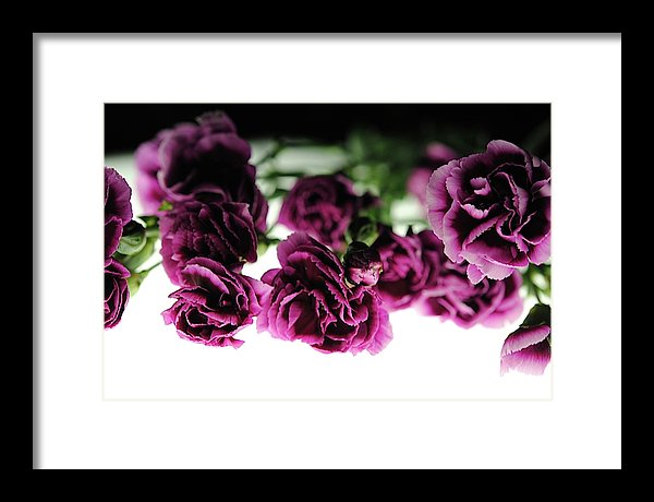 Pink And Purple Carnations On Lightbox - Framed Print - expressive-flower-art-goods.myshopify.com