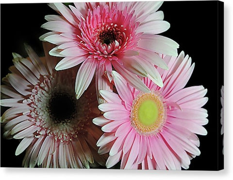 Pink Pastel Daisy Bouquet - Canvas Print