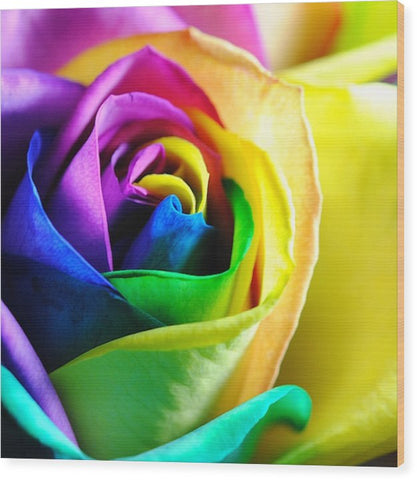 Rainbow Rose 11 - Wood Print