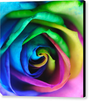 Rainbow Rose 17 - Canvas Print