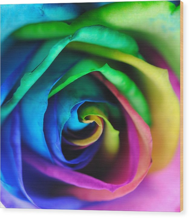 Rainbow Rose 17 - Wood Print
