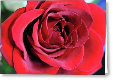 Red Rose Close Up - Greeting Card