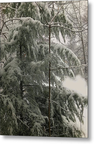 Snow Covered Pine Tree - Metal Print
