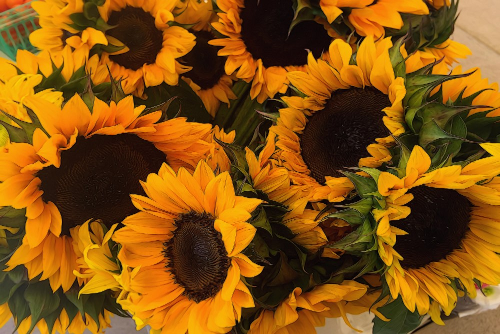Sunflowers Digital Image Download