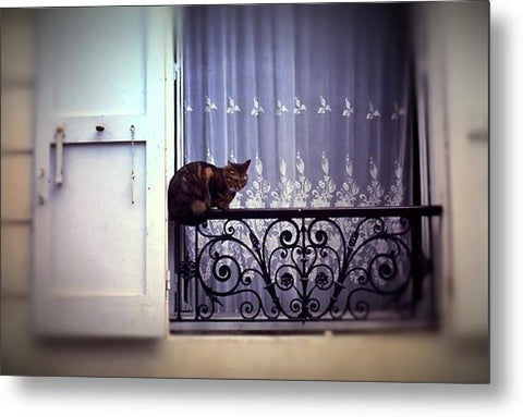 Vintage Travel Cat On A French Balcony 1967 - Metal Print