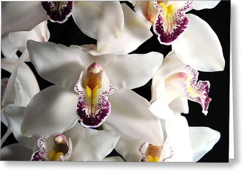 White Orchid Spray - Greeting Card