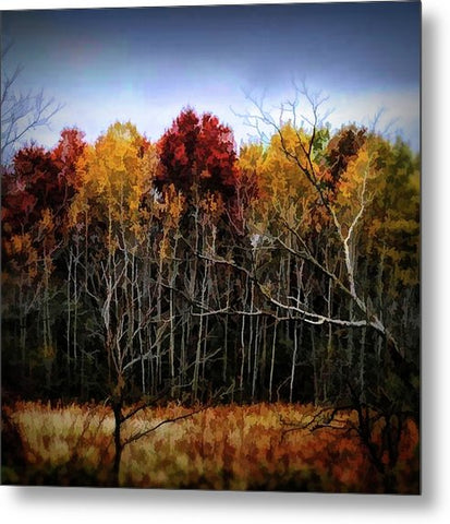 Wisconsin Woods In The Fall - Metal Print