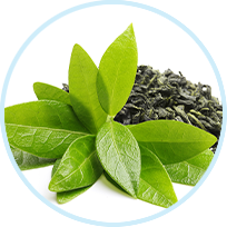 Green Tea Leaf Powdered Extract