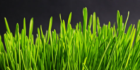 bright green grass against dark background