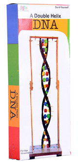 Kutuhal -  Double Helix DNA Model Making Kit