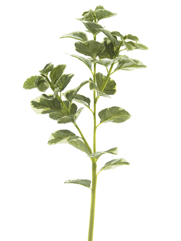"31"" Oregano Spray"