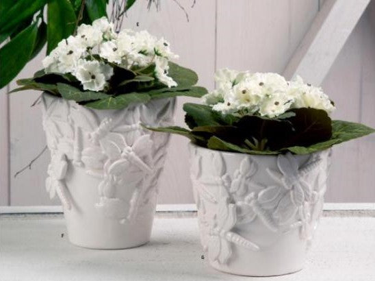 White African Violet in Metal Pot