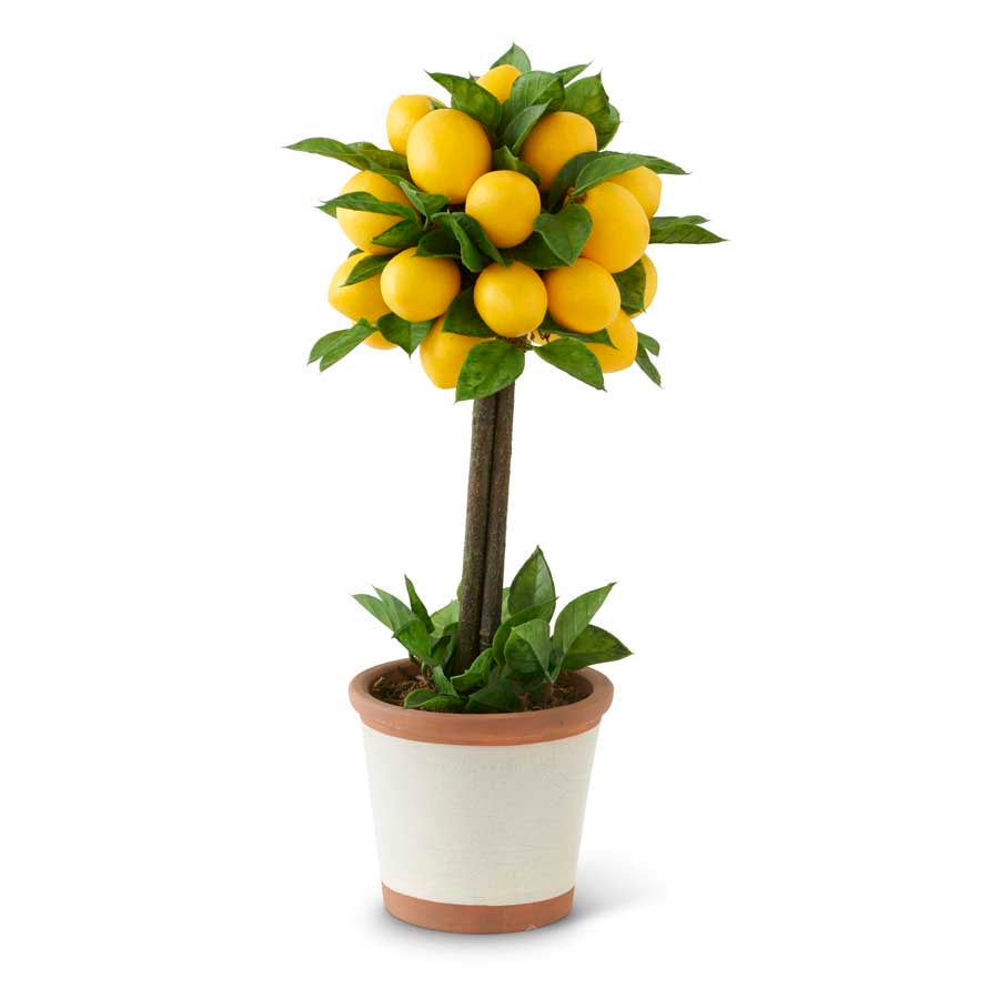 Lemon & Foliage Ball Topiary Tree