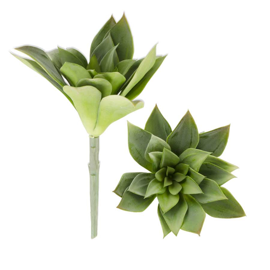 Green Sempervivum Succulent Stem