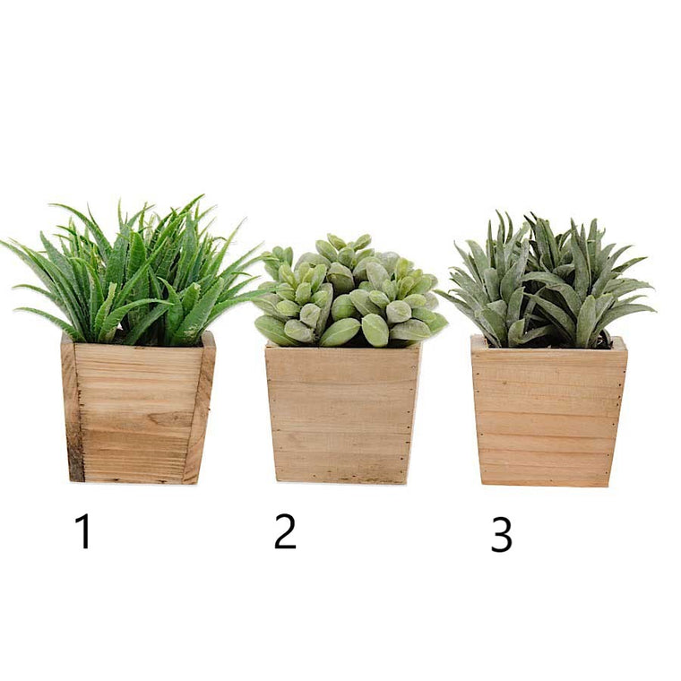 Succulent in Square Pot (Various Styles)