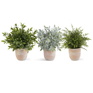 13 Inch Herb in Terracotta Pot (3 Styles)