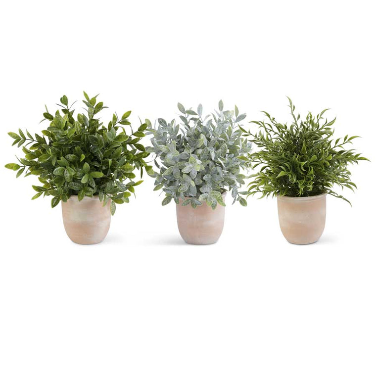 Large Herb in Terracotta Pot (3 Styles)