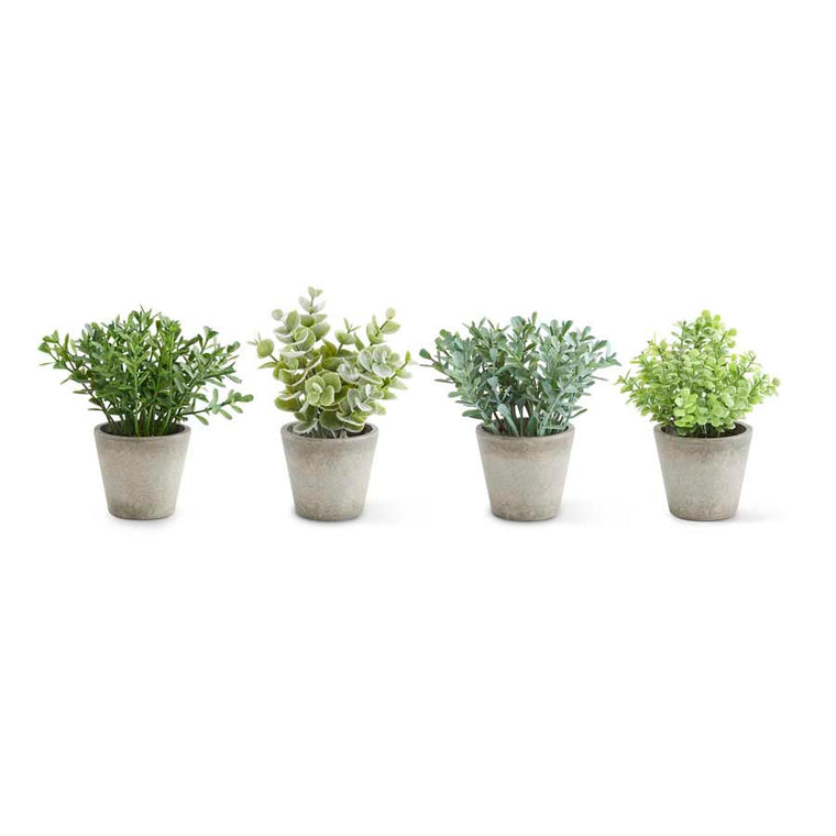Mini Herbs in Pots