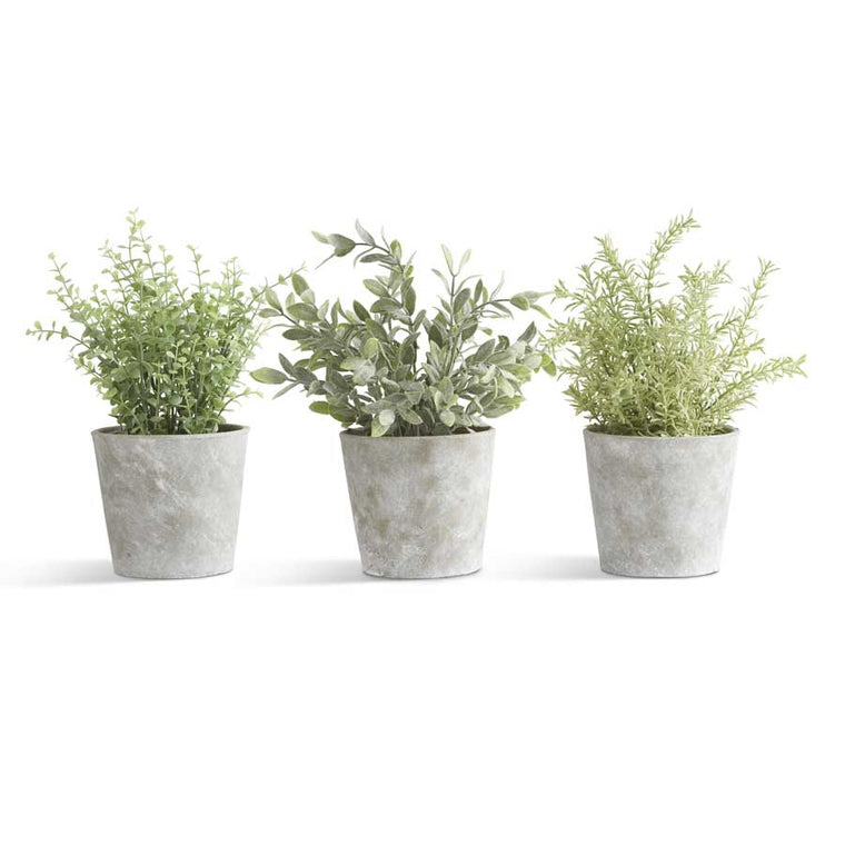 Herbs in Cement Pots