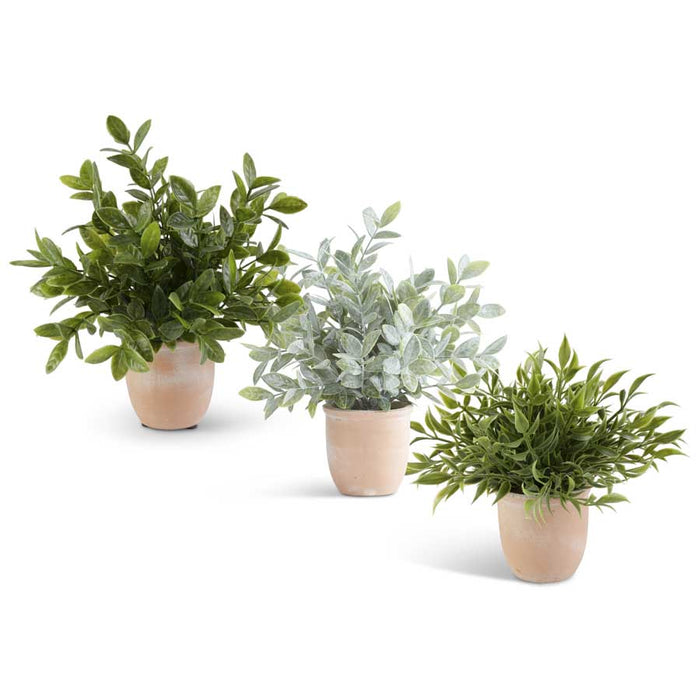 Medium Herb in Terracotta Pot (3 Styles)