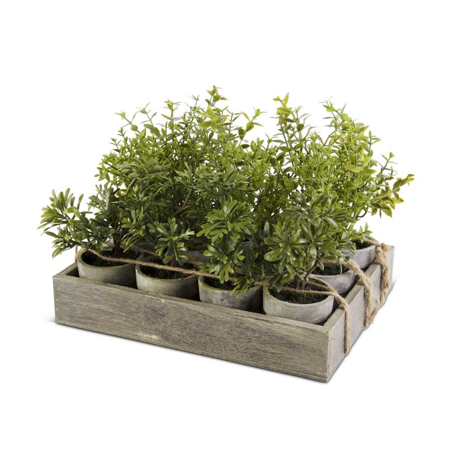 "12"" Potted Herbs (Various Styles)"