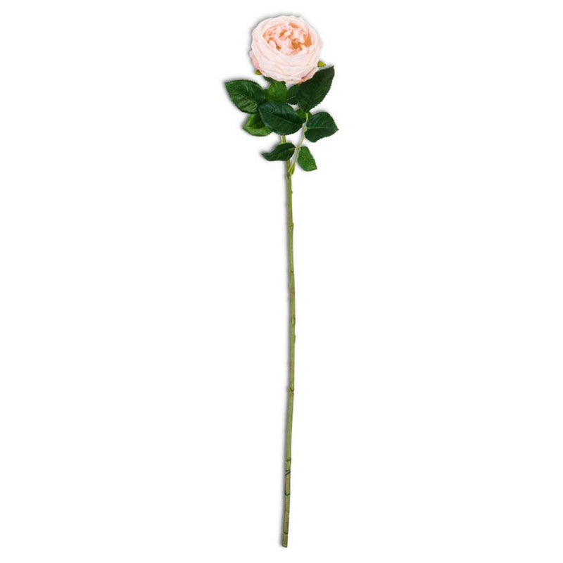 "24"" Peach Real Touch Austin Rose Stem"