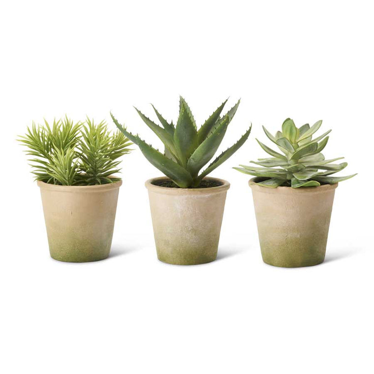 Potted Succulents (Various Styles)