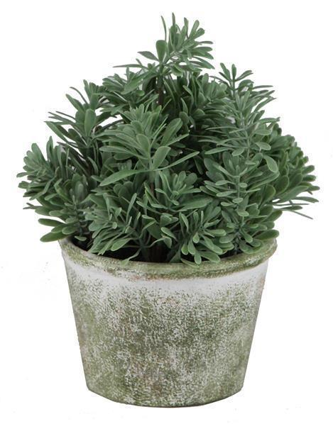 Potted Herb Plant