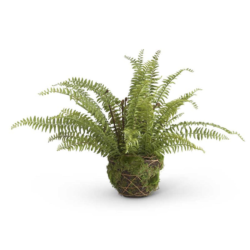 Fern in Moss and Twig Basket