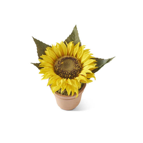 Potted Yellow Sunflower
