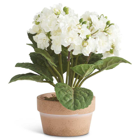 White Potted Double Bloom African Violet
