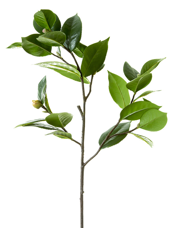Camellia Leaf Branch with Bud