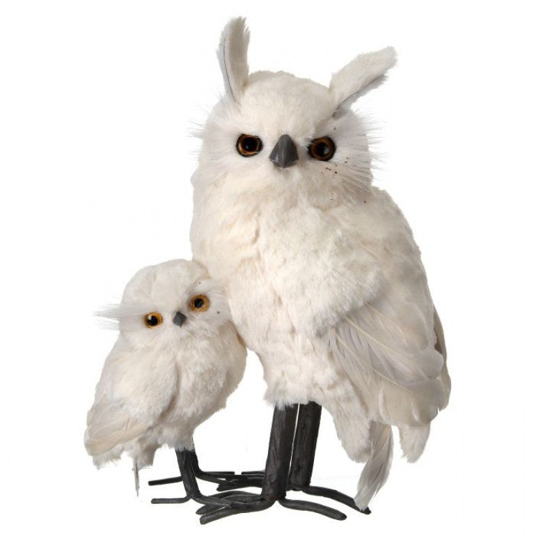 White Furred Snow Owl with Baby
