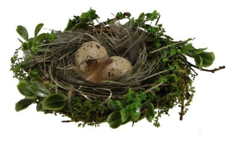 Vine Bird Nest