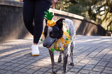 Load image into Gallery viewer, Pineapple Hat & Collar Set for Dogs and Cats