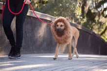 Load image into Gallery viewer, Lion Mane Costume With Ears