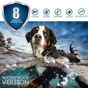 Casifor Flea Tick Prevention Collar for Dogs and Cats