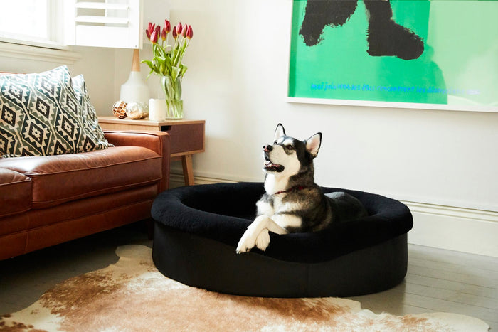 10 reasons why choosing a quality dog bed is so important