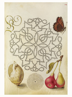 Butterfly, Marine Mollusk and Pear by Joris Hoefnagel