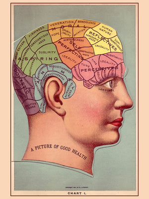 A Picture of Good Health, Phrenology Chart - 1901