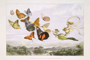 The Fairy Queen Takes an Airy Drive in a Light Carriage by Richard Doyle - 1870