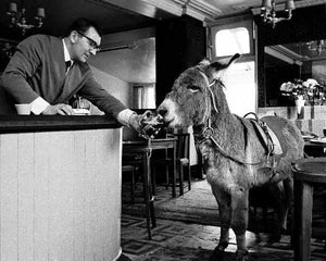 Bass the Donkey drinking beer at The Manby Arms Pub in East London by Steve Lewis - 1960s.