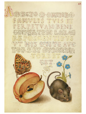 Queen of Spain Fritillary, Apple, Mouse, and Creeping Forget-Me-Not by Joris Hoefnagel - 1561