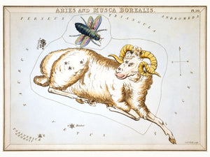 Aries and Musca Borealis by Sidney Hall - 1924