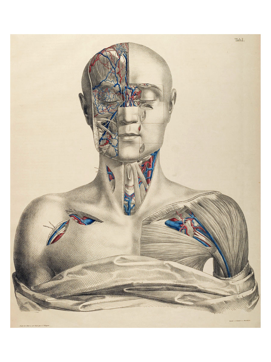 Surgical-Anatomical Tables by Anton Nuhn II - 1846