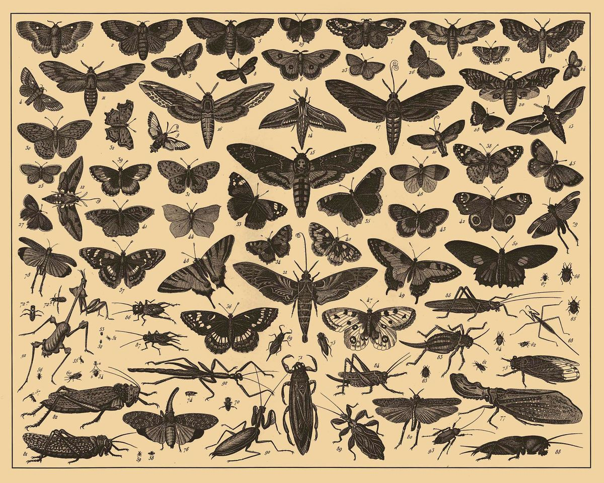Insects From the Brockhaus and Efron Encyclopedic Dictionary - c. 1900